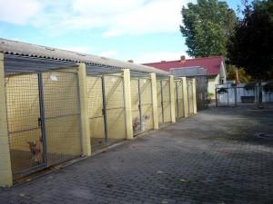 Gelände (7)